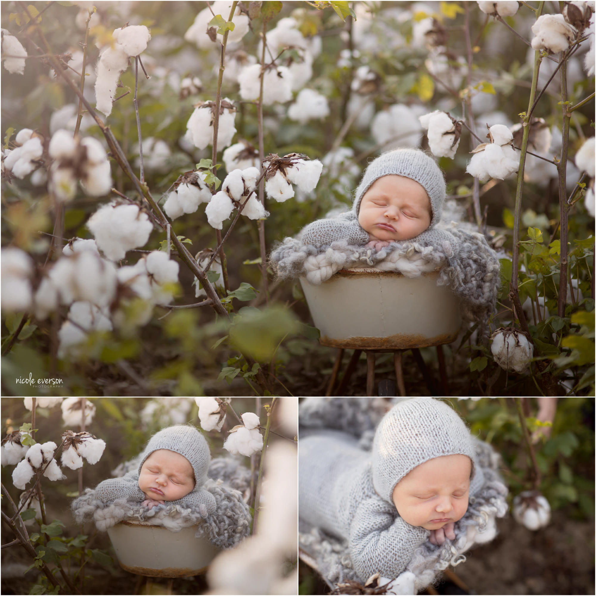 newborn photography in a Tallahassee cotton field