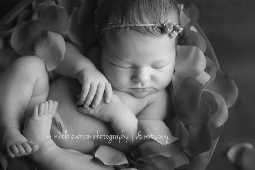 pictures of newborns | Tallahassee Florida