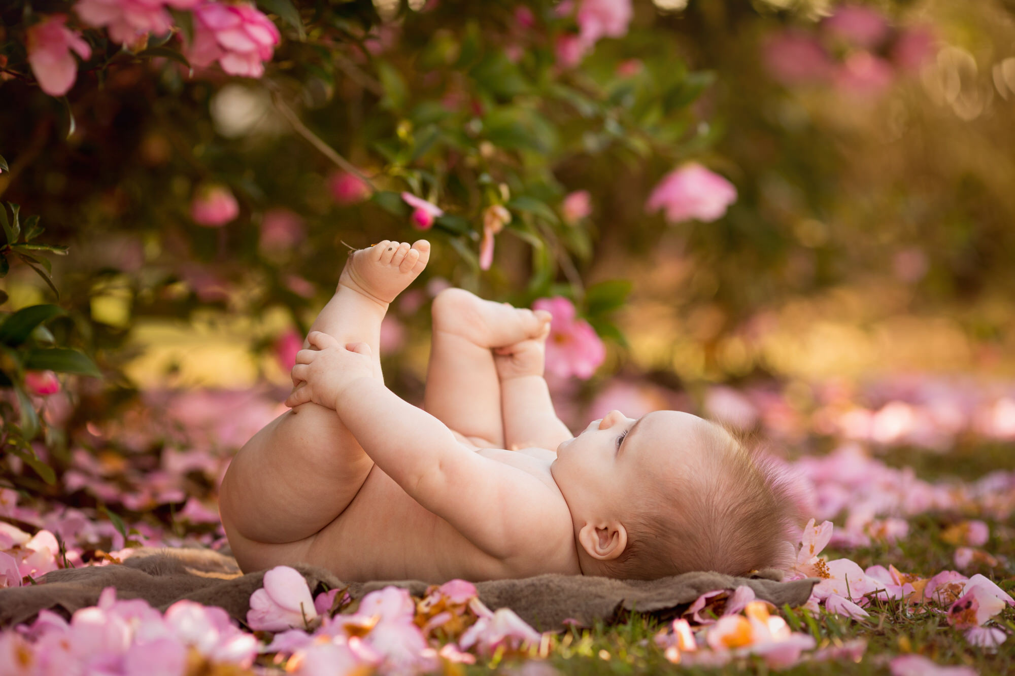 baby girl photographed among pink flowers