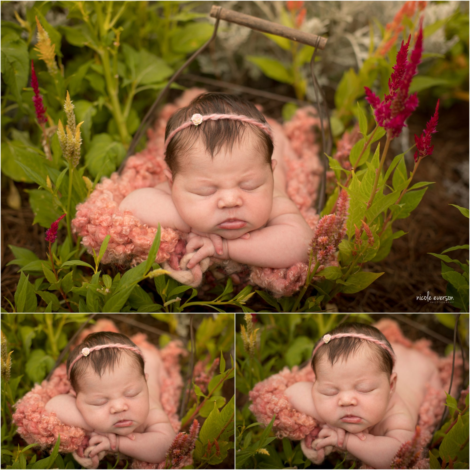 newborn photographed in a flower patch in Tallahassee FL